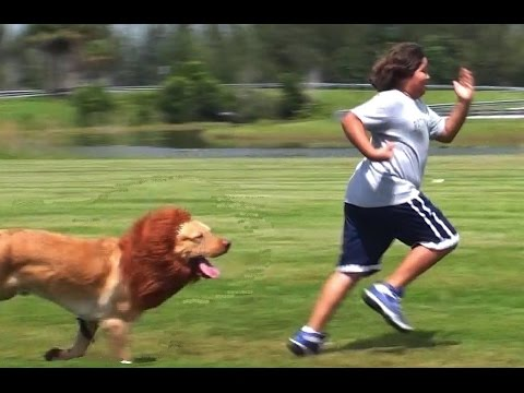 Lion Prank Best Funny Pranks Compilation