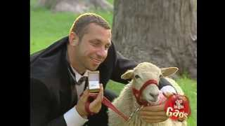 Man Marries Sheep