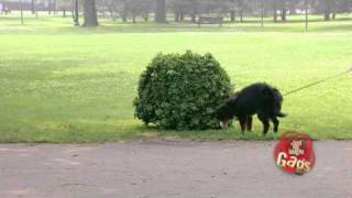 JFL Hidden Camera Pranks & Gags: Ultimate Dog Joke
