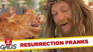 Resurrected Animals Pranks - Best of Just For Laughs Gags