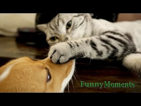 Cats Meeting Puppies for the First Time 2015